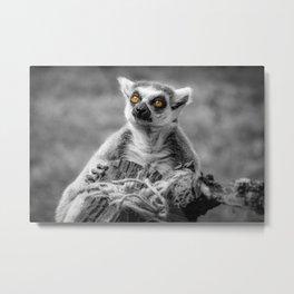 The Lemur Metal Print