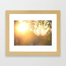 Sun Soak Framed Art Print