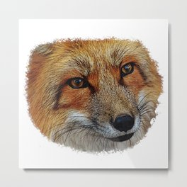 Fox face portrait, animals, nature Metal Print