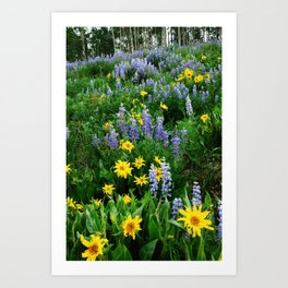 Field of wildflowers Art Print
