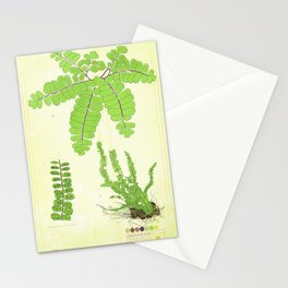 Maidenhair Fern Collection Stationery Cards