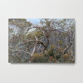 Australiana No. 1 Metal Print