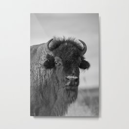 Buffalo Stance - Bison Portrait in Black and White Metal Print
