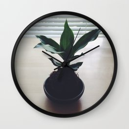 Kokedama Shadows Wall Clock