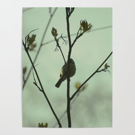 Blue tit on a branch Poster
