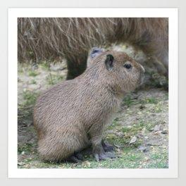 adorable capybara baby Art Print
