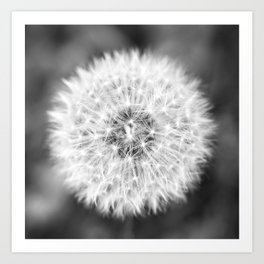 Black & White Dandelion Art Print