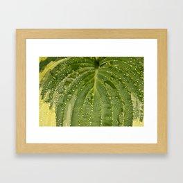 Dewy Leaf Framed Art Print