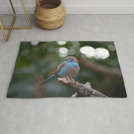 Red cheeked finch Rug