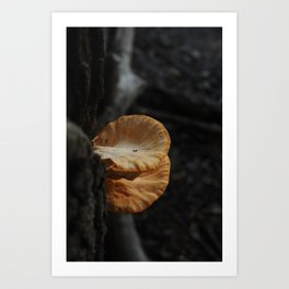Skidaway mushroom Art Print