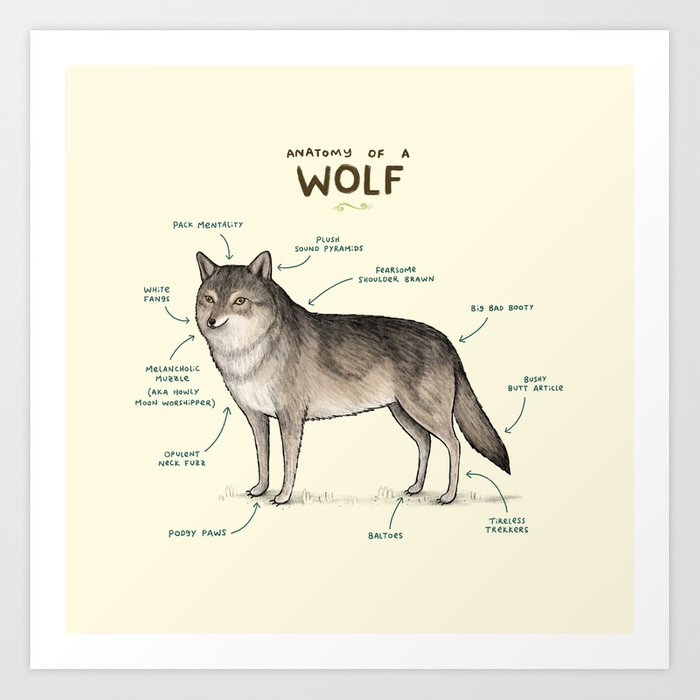 Anatomy Of A Wolf Art Print By Sophiecorrigan Society6