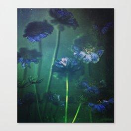 Scabious Blue Canvas Print