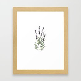 Lavender art print, ink and watercolor Framed Art Print