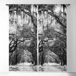 Spanish Moss on Southern Live Oak Trees black and white photograph / black and white art photography Blackout Curtain