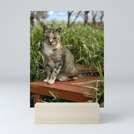 Lady Cuteness (Lanai Cat Sanctuary) Mini Art Print