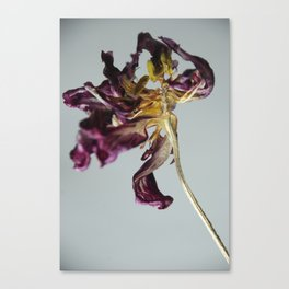 Last Dance Tulip Canvas Print