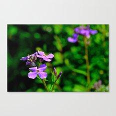 Springing Purple Canvas Print