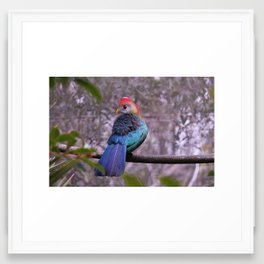 Blue Feathers Framed Art Print