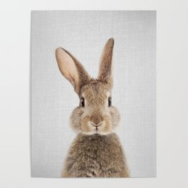 Rabbit - Colorful Poster