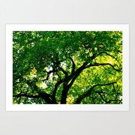Vitreous Tree Art Print