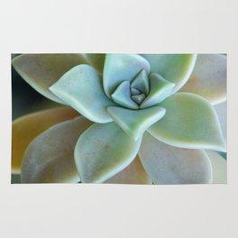 Succuent Bloom Rug