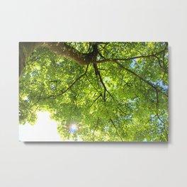 Sunshine through leaves Metal Print