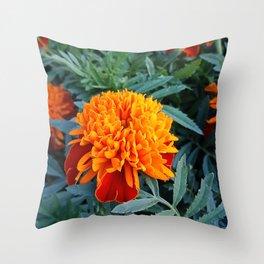Orange flower of a marigold Throw Pillow