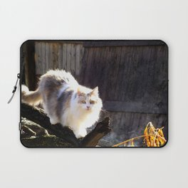 The Beautiful Maine Coon Dilute Calico Laptop Sleeve
