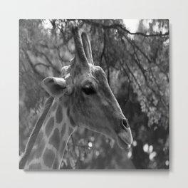 Giraffe Portrait Metal Print