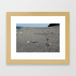 Sole Survivor Framed Art Print