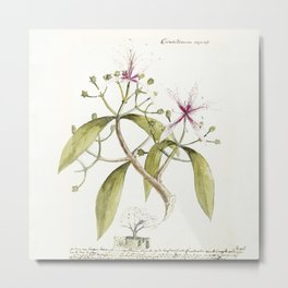 Timeless in its beauty- botanical illustration Metal Print