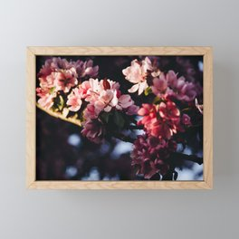 Photo of Cherry Blossom Flowers in Golden Hour in Amsterdam, the Netherlands | Fine Art Colorful Travel Photography | Framed Mini Art Print
