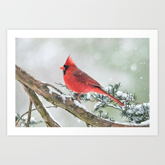 Cardinal Holding Steady in the Storm Art Print