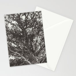 Growth | Estes Park, Colorado Stationery Cards