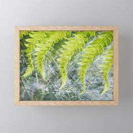 Fern 5 Framed Mini Art Print