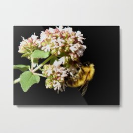Garden fuzzy bee Metal Print