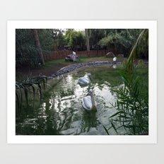 Oasis Pelican Art Print
