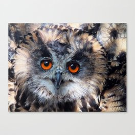 European Eagle Owl Canvas Print