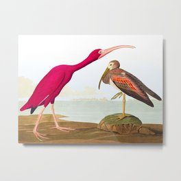 Scarlet Ibis Bird Metal Print