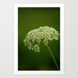 White wild flower Art Print