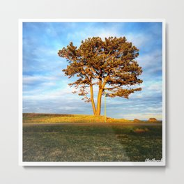 Tree In Spotlight Metal Print