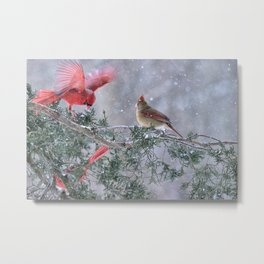 Cardinals Jostling on a Branch in a Snow Storm Metal Print
