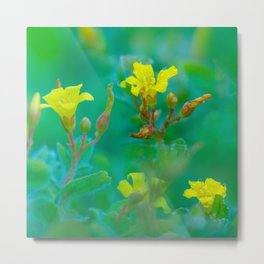 Soft yellow wildflowers Metal Print