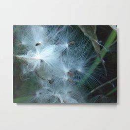 Milkweed Seeds Float Metal Print