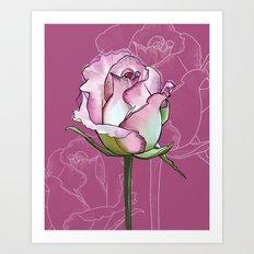 Pink rose - botanical flower illustration Art Print