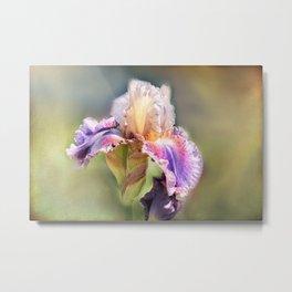 iris gladiolus in the garden Metal Print
