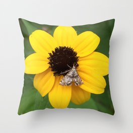 Moth on Black Eyed Susan Flower Throw Pillow