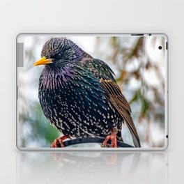 European Starling Laptop & iPad Skin