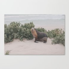 seal! Canvas Print