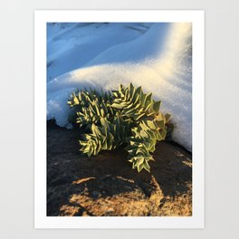 Mountain side succulents Art Print